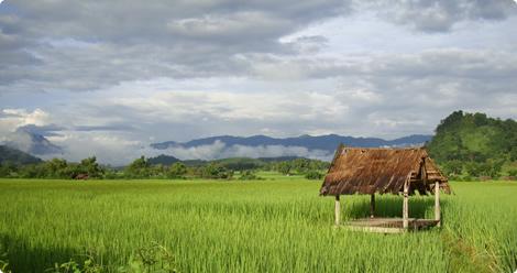 laos-rijstveld